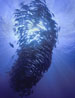 undersea_v_08.jpg