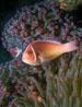 undersea_v_11.jpg