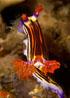 undersea_v_12.jpg