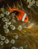 undersea_v_13.jpg