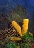 undersea_v_20.jpg