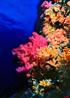 undersea_v_24.jpg